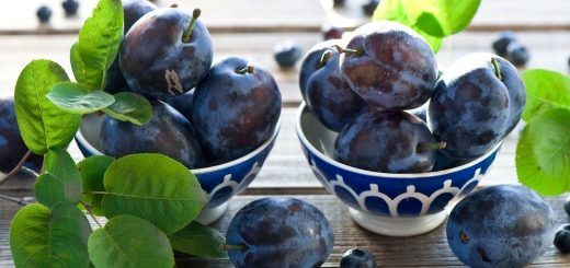 Слива: поздний фрукт на все случаи жизни